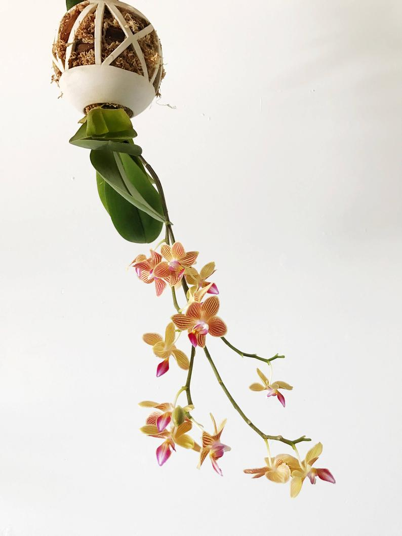 8 decorative vases that are ideal for your orchids 06