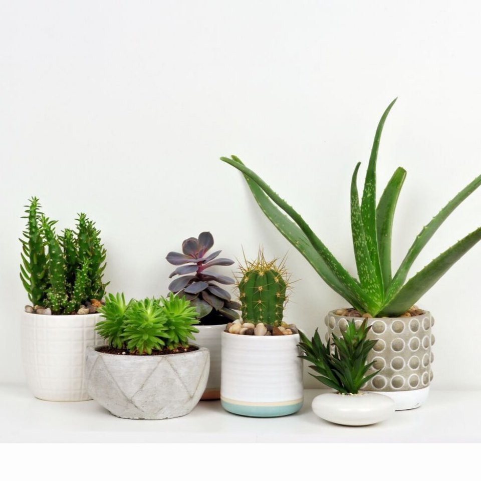 How to properly care for your cacti and succulents 05