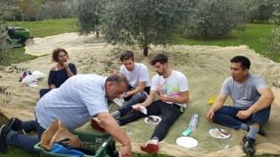 pranzo-raccolta-olive