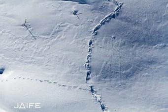 Traces sur la neige - Queyras 2013
