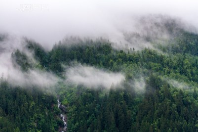 Cloud and forest