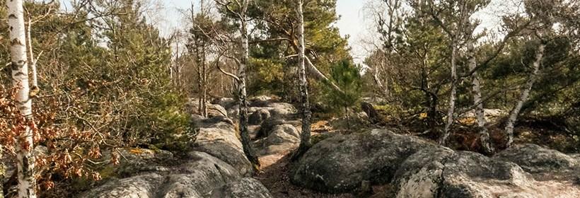 S5-S9 : Balade en fôret de Fontainebleau et 3 pignons 1