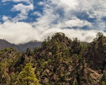 Le côté forestier de la Palma 17