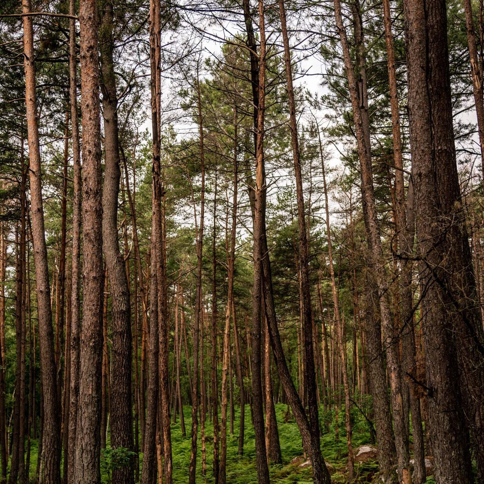 Où courir en forêt de Fontainebleau ? 46