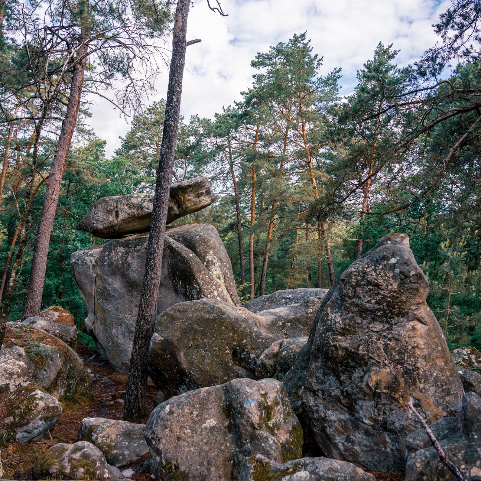Où courir en forêt de Fontainebleau ? 48