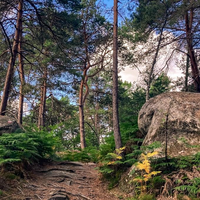 Où courir en forêt de Fontainebleau ? 83