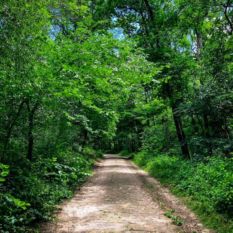 Où courir en forêt de Fontainebleau ? 89