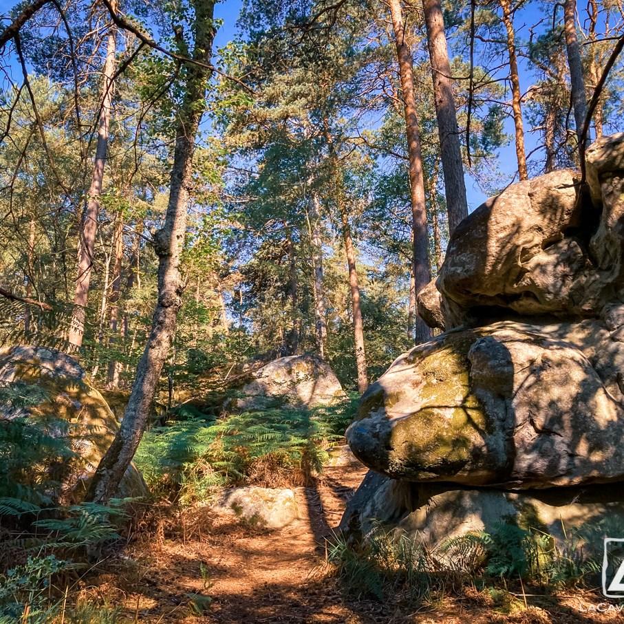 Où courir en forêt de Fontainebleau ? 55