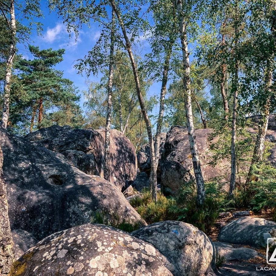 Où courir en forêt de Fontainebleau ? 60