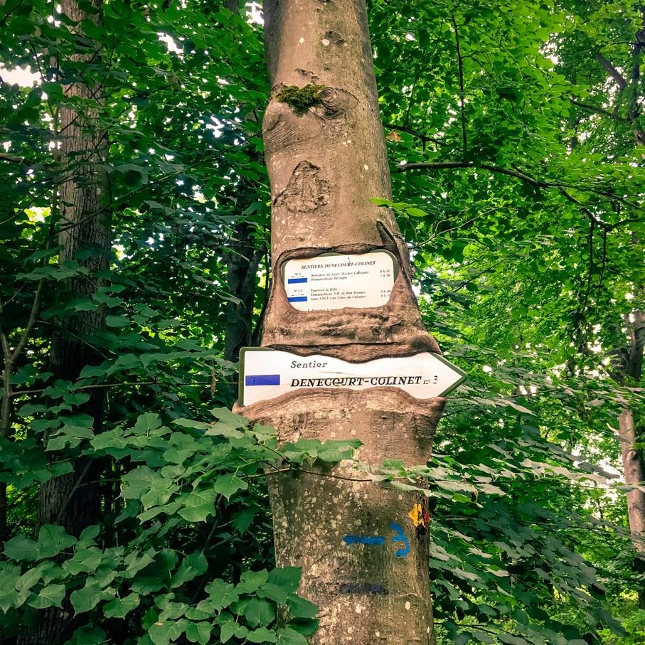 Où courir en forêt de Fontainebleau ? 2