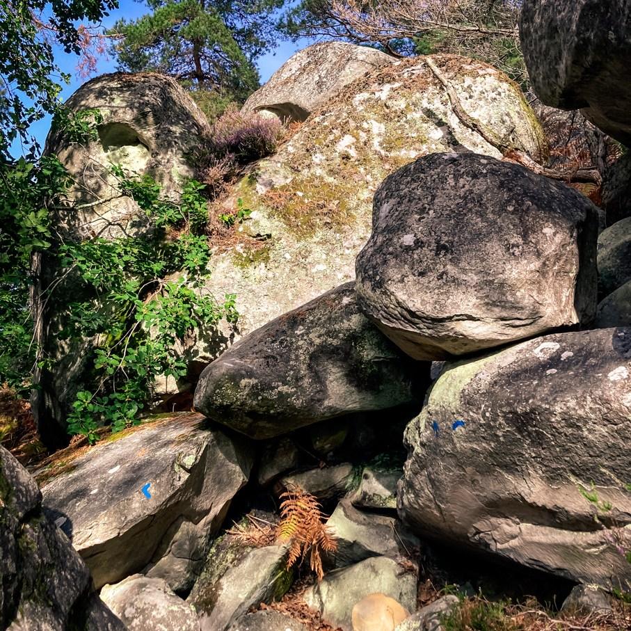 Où courir en forêt de Fontainebleau ? 21