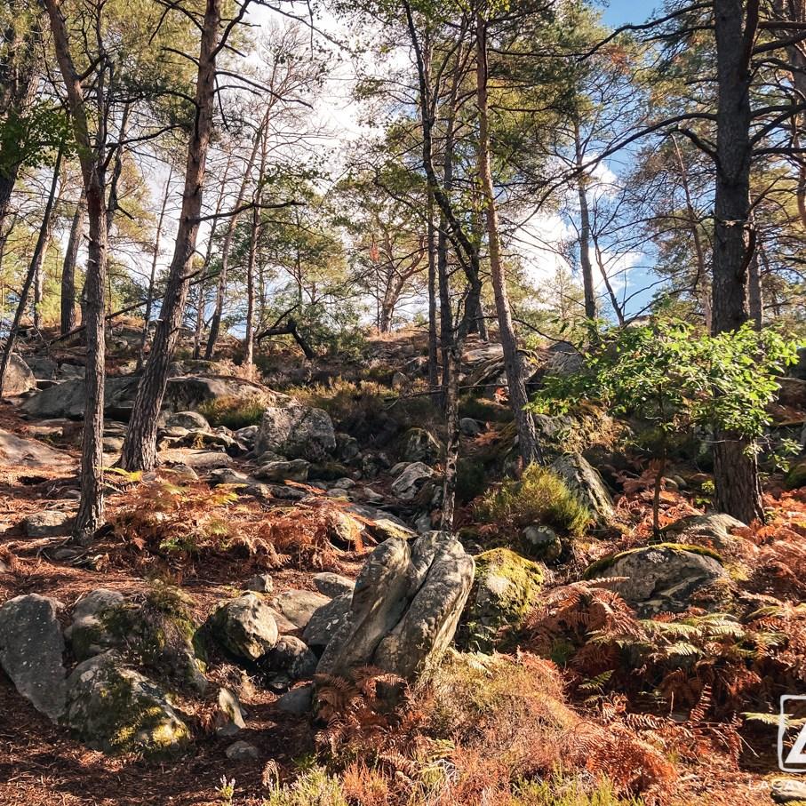 Où courir en forêt de Fontainebleau ? 22