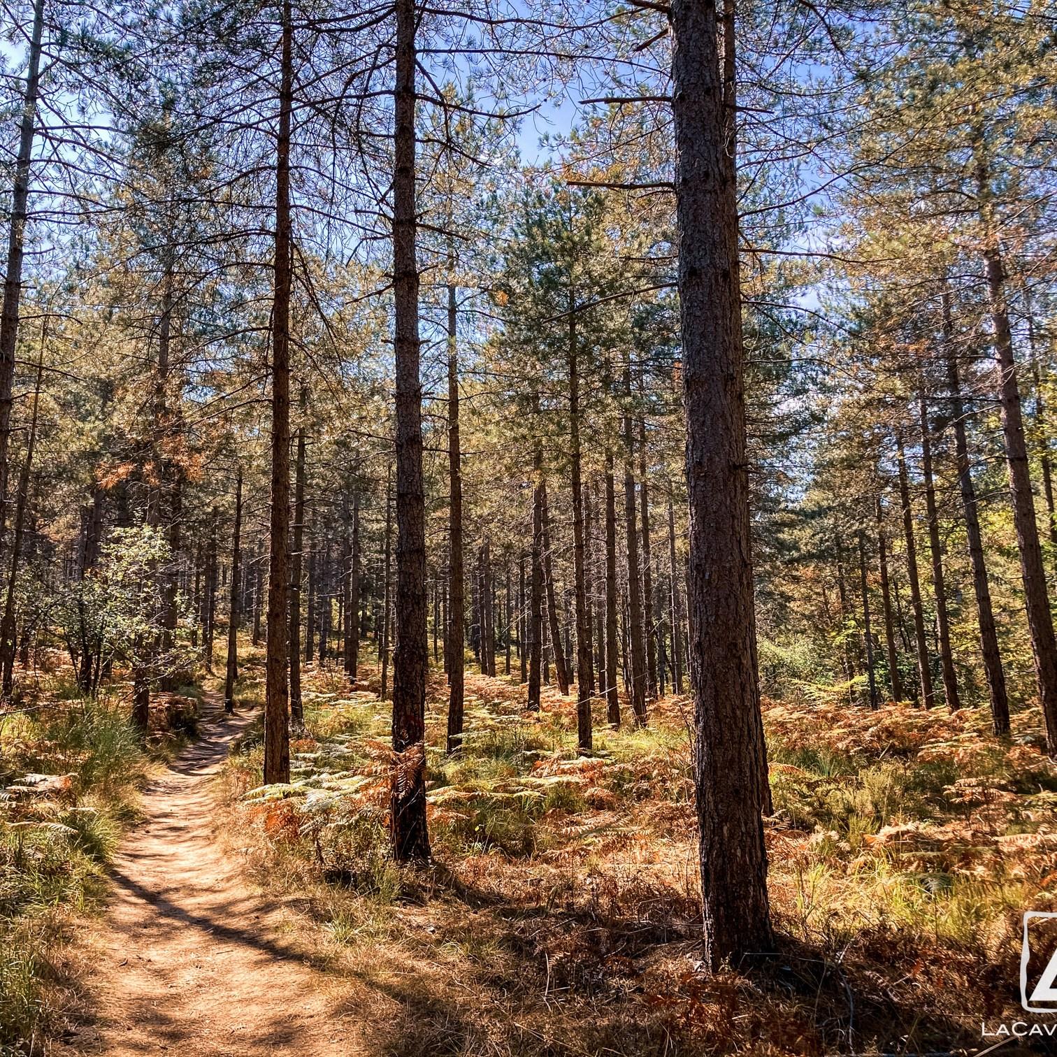 Où courir en forêt de Fontainebleau ? 9
