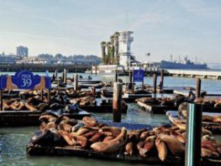 Pier39_Leoni Marini
