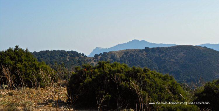 Nord Sardegna cosa vedere Barbagia
