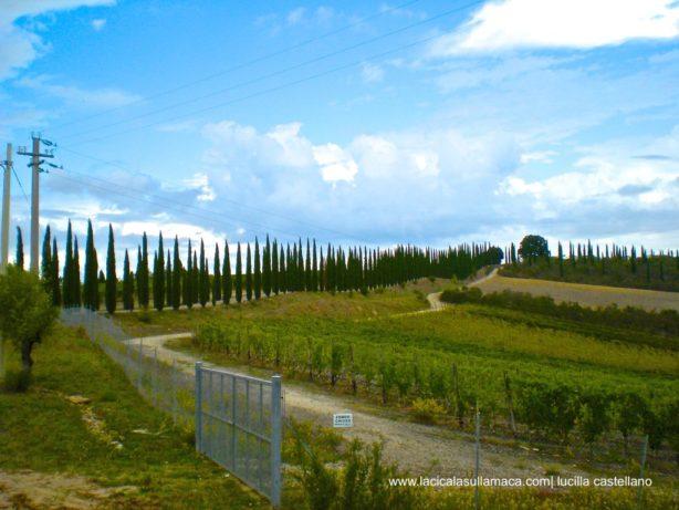 Montalcino_Pioppi