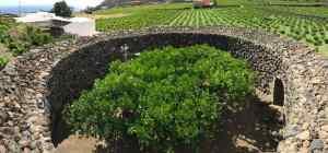 Donnafugata Zibibbo di Pantelleria