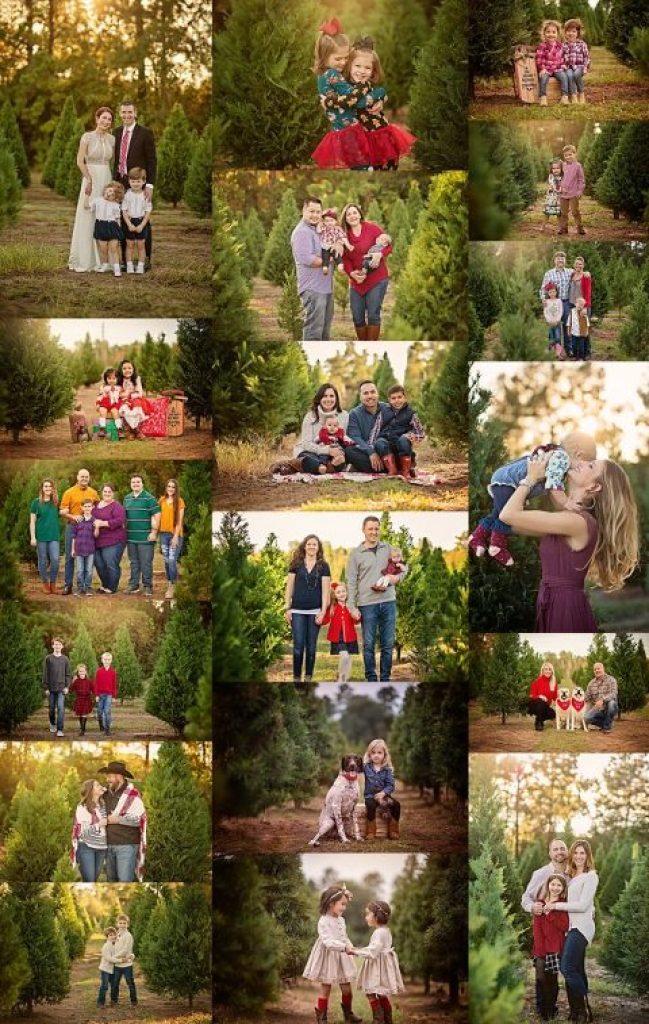 Tree Farm Minis - Woodlands Photographer