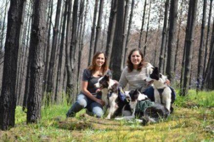 ¡Historias Insólitas! Perros replantan bosques quemados en Chile 2