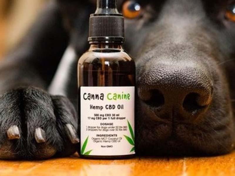 Cannabis para mascotas, una terapia prometedora