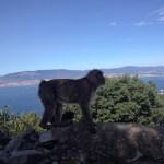 Gibraltar opica