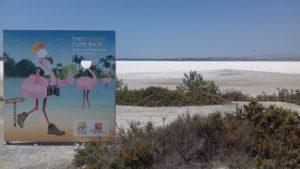 Plameniaky sú symbolom Soľného jazera
