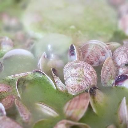 Merluza con almejas en salsa verde (4)