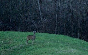 Deer-lacompagniadelchianti