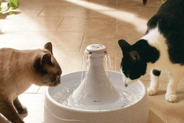 amount of water for cats