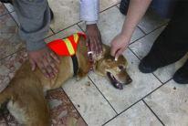 Perro recibe cariño por personas