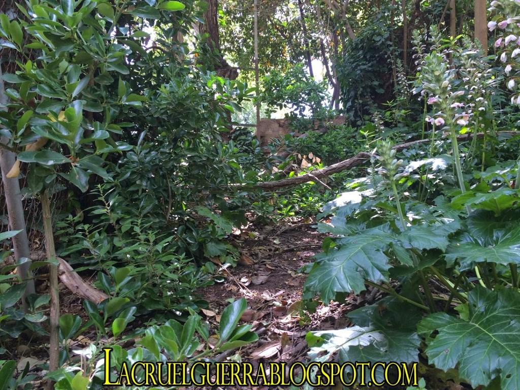 bosque muralla montjuic