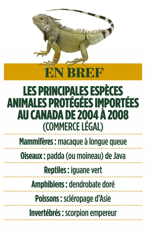 trafic-animaux-tableau-importations-Canada