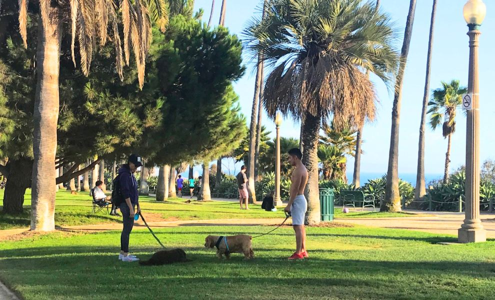 Strangers meeting while walking their dogs