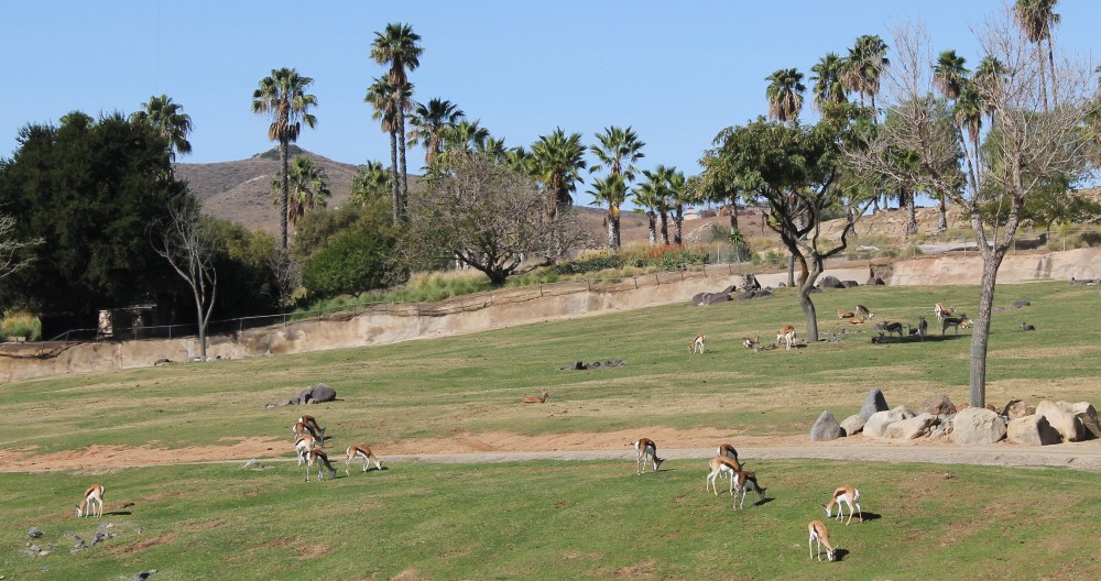 View from African Plains tram ride