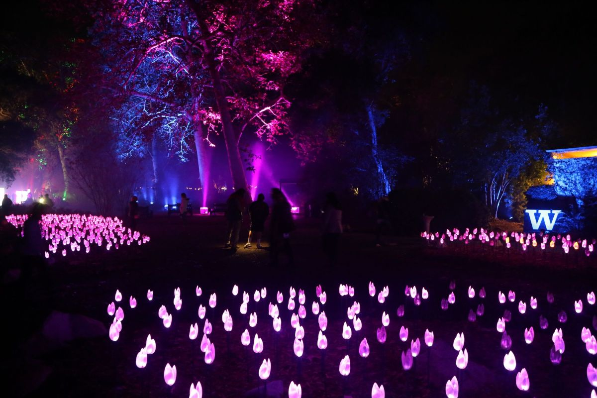Enchanted: Forest of Light at Descanso Gardens – An Ideal Holiday Date Idea