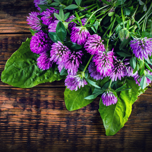red clover for hair loss healthy hair for hair growth regrowth thinning thin fine thickening hair