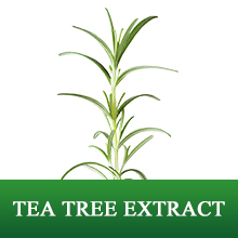 TEA TREE EXTRACT