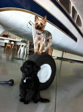 Stephanie Stephenson N2160C & guard dogs