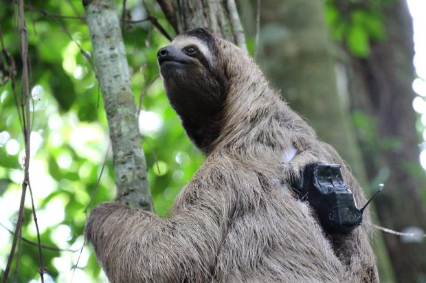 Sloth backpack, Sloth Sanctuary, Costa Rica