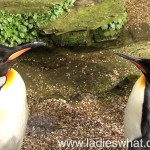 A trip to Birdland Park and Gardens