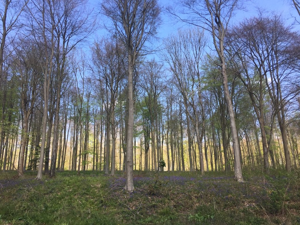 West Woods bluebell woods in wiltshire | Ladies What Travel