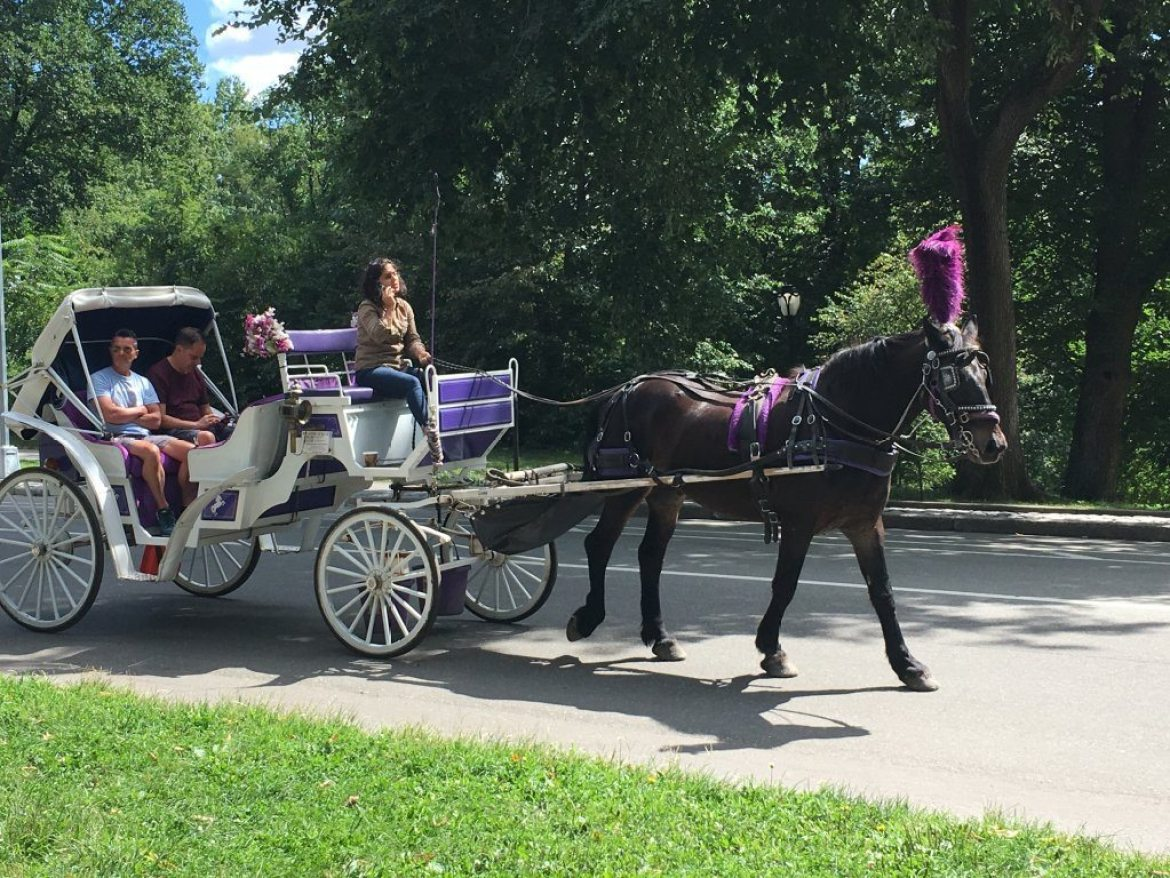 A horse and cart pulls tourists around Central Park