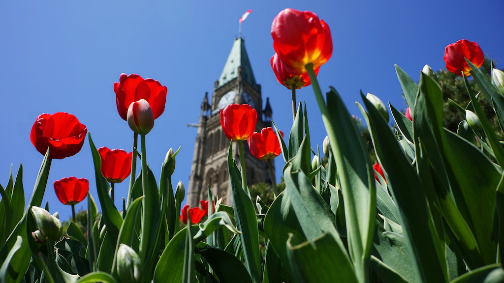 Parliament Hill Peace Tower Tulips Image credit Ottawa Tourism