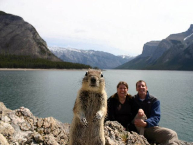 http://news.distractify.com/fun/humor/perfect-timed-photos/