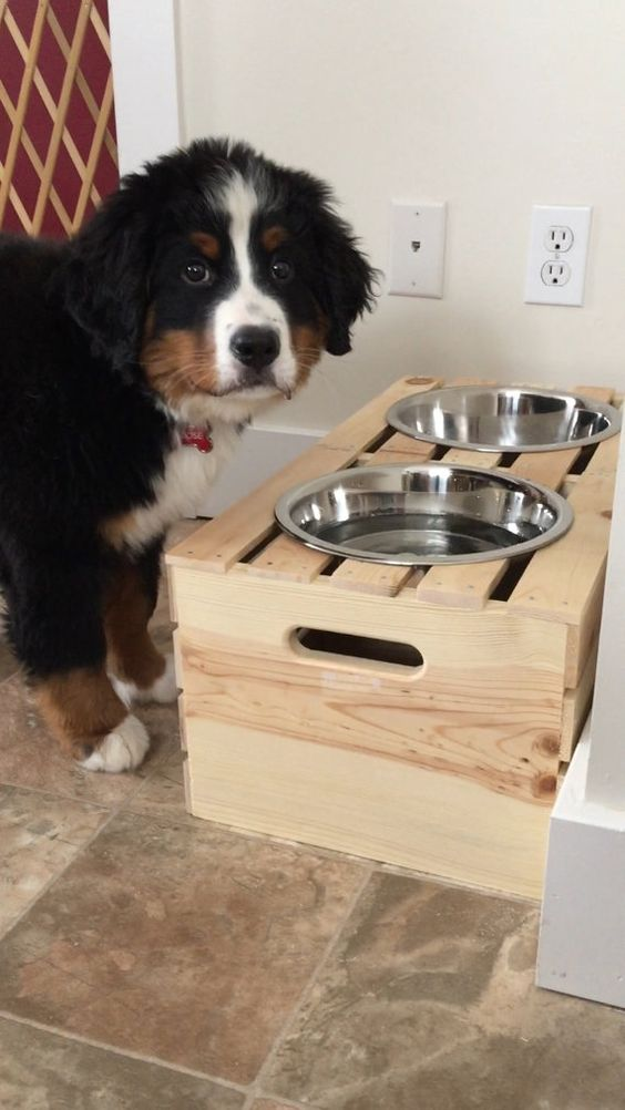 https://www.etsy.com/listing/224604332/dog-bowl-stand?ga_order=most_relevant&ga_search_type=all&ga_view_type=gallery&ga_search_query=dog%20bowls&ref=sr_gallery_18