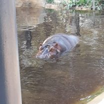 dierentuin-barcelona-2