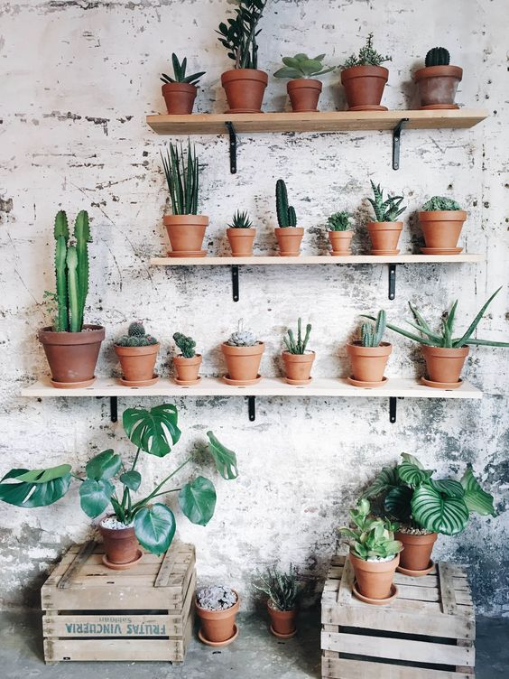 https://cactus-and-succulents.tumblr.com/post/145349651264/home-inspo