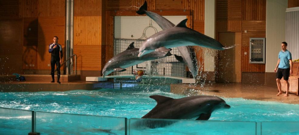 Ce que vous devez savoir sur les delphinariums: la captivité des dauphins réduit drastiquement leur espérance de vie