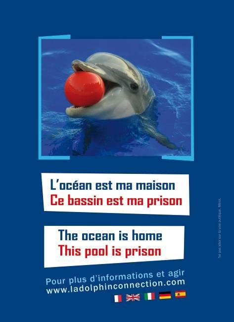 Communique de presse Opération pour les dauphins d'Antibes