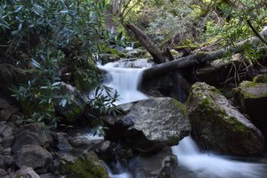 Falls Trail at Mount Diablo